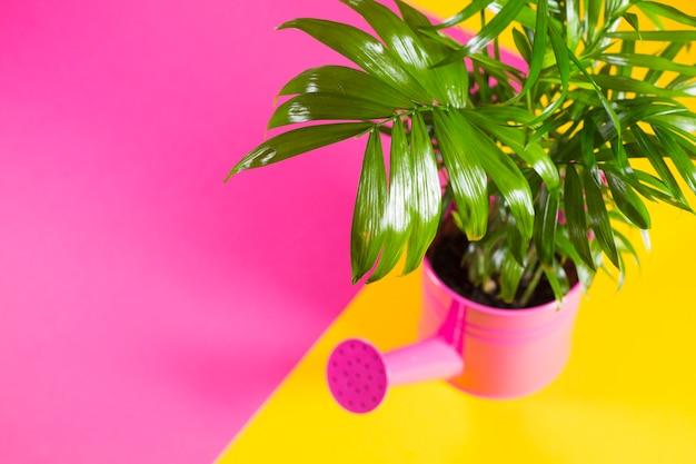 Plante verte style palmier top fleur superbe palmier for Palmier plastique ikea
