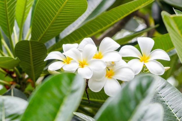 Fleur Tropicale Blanche Journalphoto