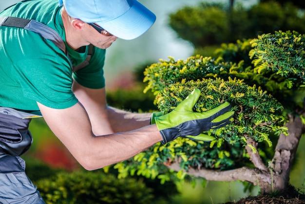Prendre soin des arbres de jardin t l charger des photos - Arbres de jardin ...