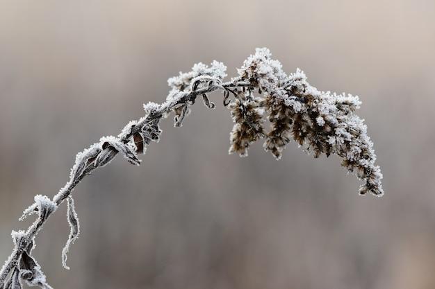 Couverte de neige vecteurs et photos gratuites - Photos de neige gratuites ...