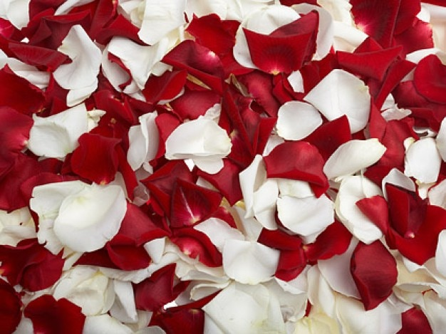roses rouges et de p tales de roses blanches t l charger des photos gratuitement. Black Bedroom Furniture Sets. Home Design Ideas