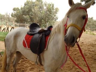 selle de cheval belle photo gratuit