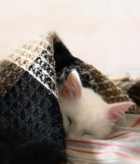 Sommeil de r ve chat t l charger des photos gratuitement - Telecharger image de chat gratuit ...