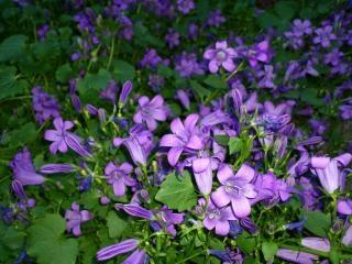Violette fleur t l charger des photos gratuitement - Image fleur violette ...