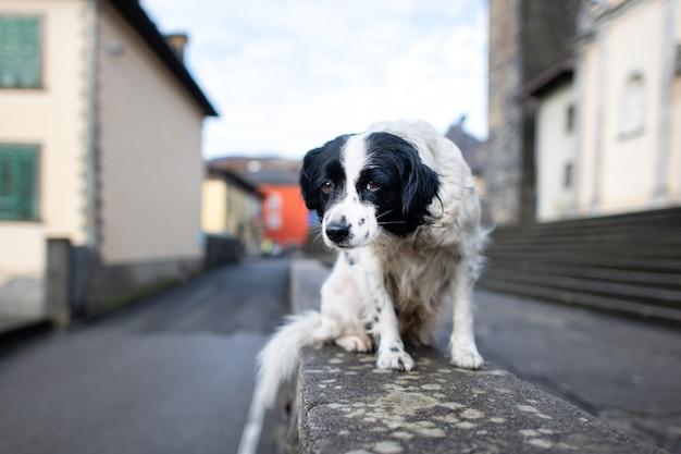 Un cane abbandonato in piedi su un muro in una città Foto Premium