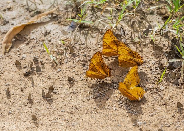 Sulla farfalla colorata nella giornata di sole Foto Premium