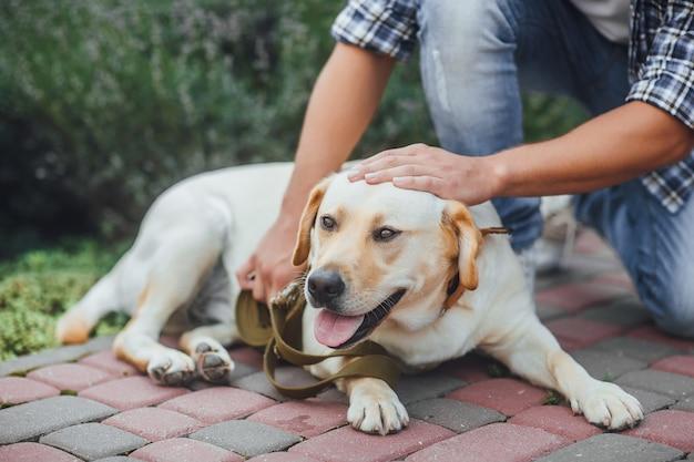 Attivo, sorriso e felice cane labrador retriever all'aperto nel parco di erba Foto Premium
