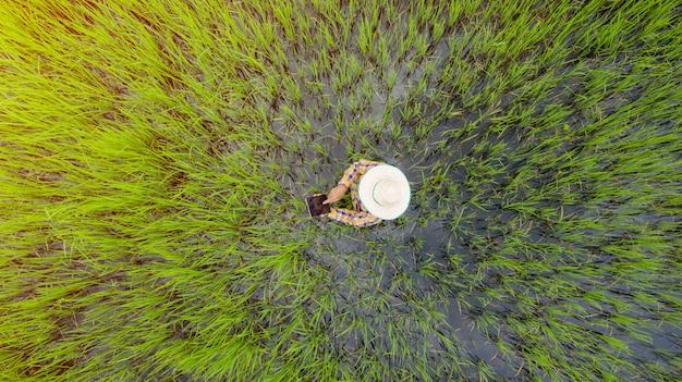 Vista aerea superiore dell'agricoltore che utilizza la compressa digitale in un giacimento verde del riso, vista da sopra sparato dal fuco Foto Premium