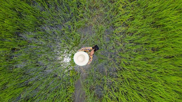 Vista superiore aerea dell'agricoltore che utilizza compressa digitale in un giacimento verde del riso Foto Premium