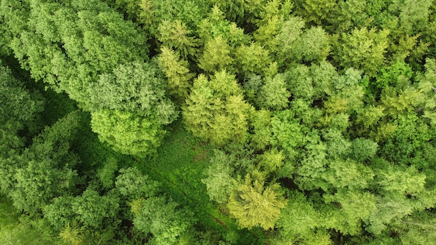 Vista aerea della foresta durante una giornata estiva Foto Premium