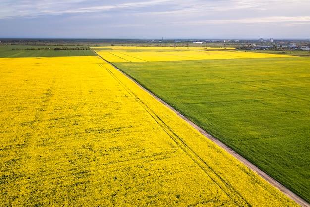 Vista aerea della strada a terra diritta nei campi verdi e gialli con le piante di colza di fioritura il giorno soleggiato di estate o della primavera. fotografia di droni. Foto Premium