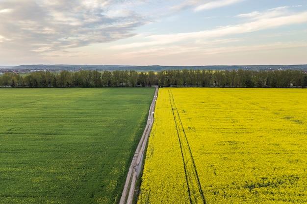 Vista aerea della strada a terra dritta con pozzanghere di pioggia nei campi verdi con piante di colza in fiore su sfondo blu cielo copia spazio. fotografia di droni. Foto Premium