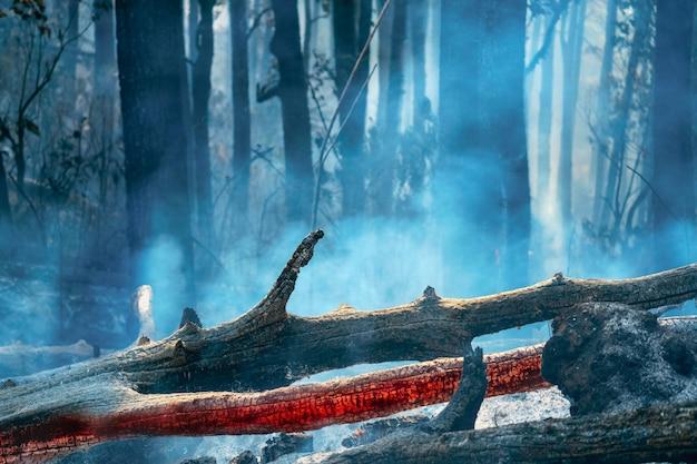 Dopo l'incendio della foresta pluviale il disastro sta bruciando causato dagli esseri umani Foto Premium