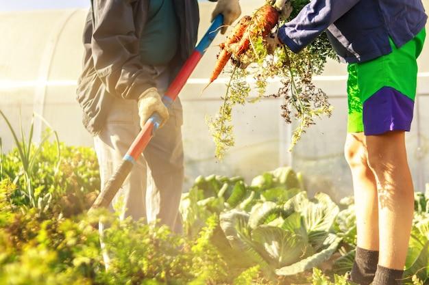 Agricoltura due persone giovani adolescente e uomo anziano in abiti da lavoro Foto Premium