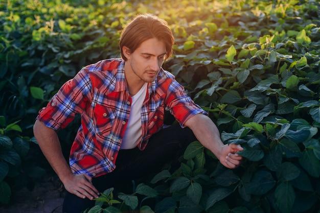 Agronomo in un campo che prende il controllo della resa e tocca le piante al tramonto. - vista frontale Foto Premium