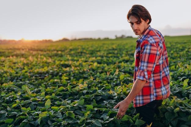 Agronomo in un campo che prende il controllo delle piante di raccolto touchesa. Foto Premium