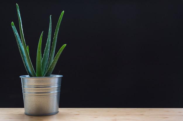 Aloe vera in contenitore d'argento sul tavolo di fronte a sfondo nero Foto Premium