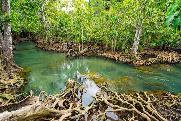 Incredibile canale color smeraldo cristallino con foresta di mangrovie a thapom krabi thailandia Foto Premium
