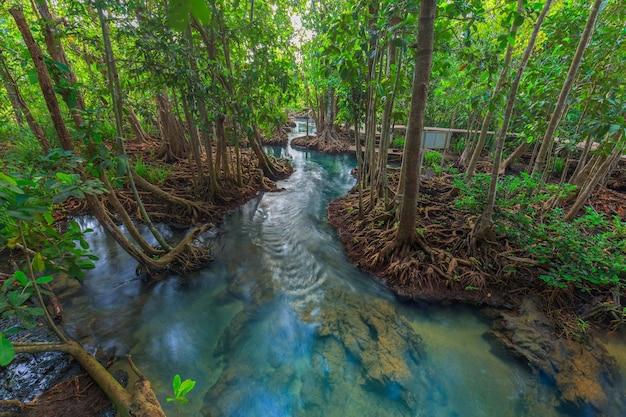 Incredibile canale smeraldo cristallino con foresta di mangrovie Foto Premium