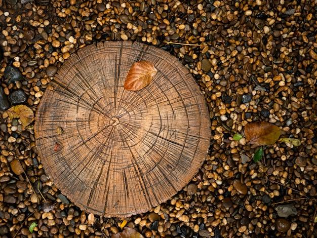 Anello annuale strutturato dell'età dell'albero di legno circa la crescita delle piante all'interno di ghiaia nera Foto Premium