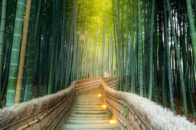 Arashiyama bamboo forest Foto Premium