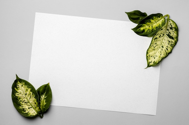 Disposizione delle foglie verdi con scheda vuota Foto Premium
