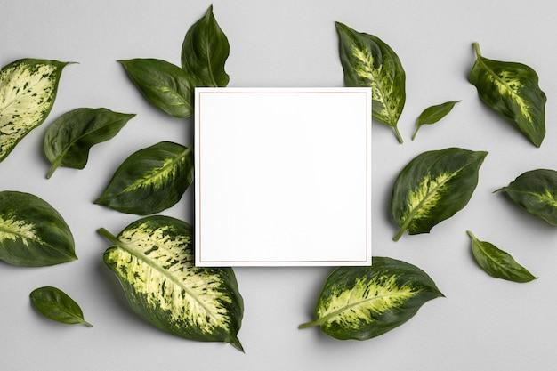 Disposizione delle foglie verdi con cornice vuota Foto Premium