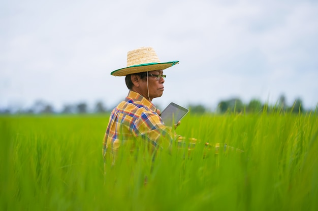 Coltivatore asiatico che utilizza compressa digitale in un giacimento verde del riso, concetto astuto di agricoltura di tecnologia Foto Premium