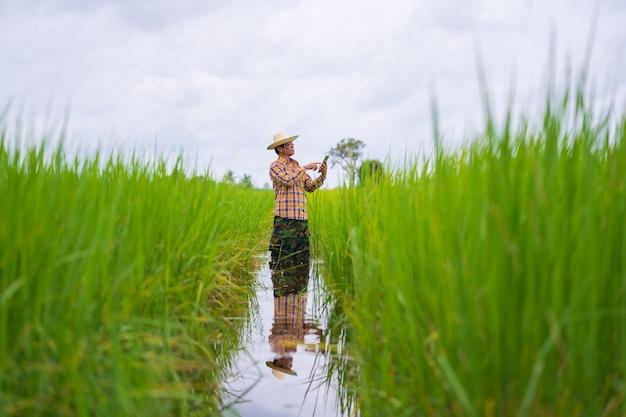 Coltivatore asiatico che utilizza compressa digitale in un giacimento verde del riso Foto Premium