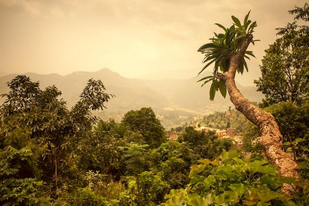 Paesaggio asiatico. sfondo naturale Foto Premium