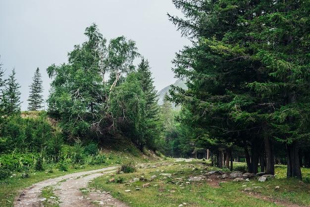 Atmosferica foresta verde paesaggio con strada sterrata tra gli abeti in montagna Foto Premium