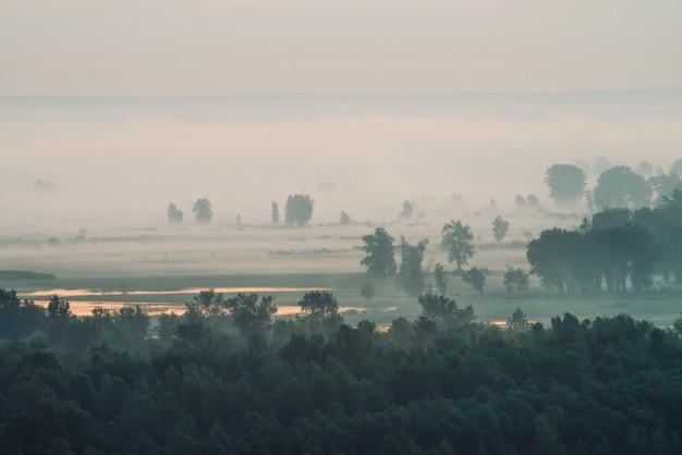 Atmosferico paesaggio con foresta nella nebbia all'alba Foto Premium