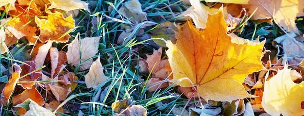 Sfondo autunno con foglie nel gelo Foto Premium