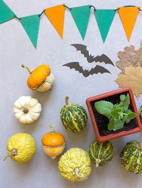 Zucche di halloween di autunno, fondo grigio Foto Premium