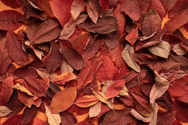 Sfondo di foglie di autunno, primo piano vista dall'alto. Foto Premium
