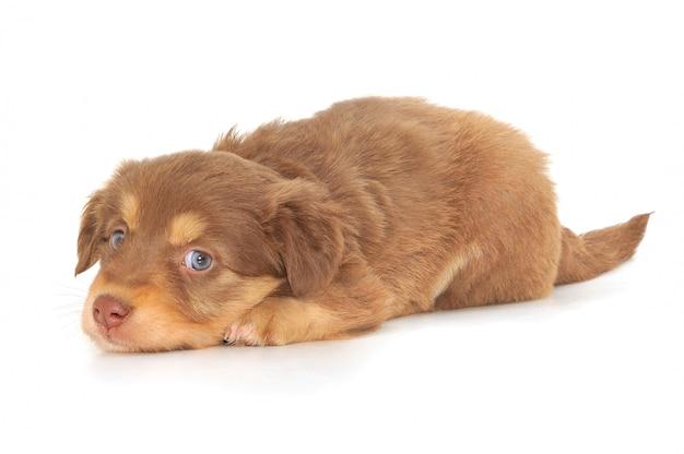Cucciolo del bambino isolato su fondo bianco Foto Premium