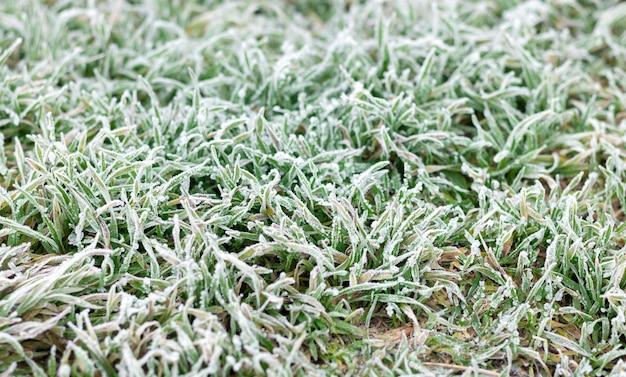 Sfondo di brina o trasformata per forte gradiente sull'erba verde al mattino Foto Premium