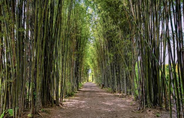 Arco di bambù, strada, luce pomeridiana Foto Premium