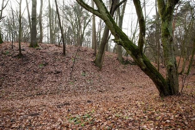 I tronchi spogli degli alberi che crescono nella foresta nella stagione autunnale. Foto Premium