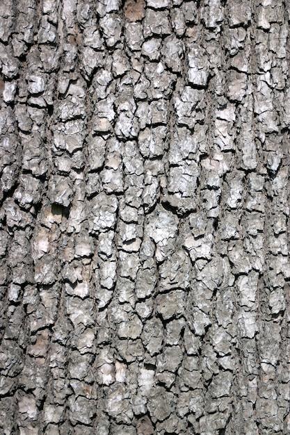 Corteccia di un vecchio albero Foto Premium