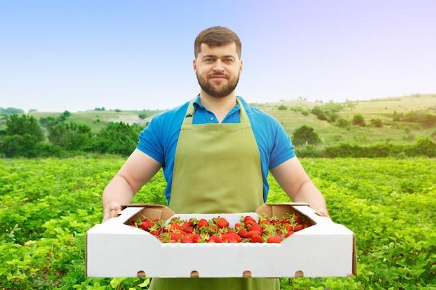 Uomo di mezza età barbuto in piedi in un campo di fragole con una scatola di fragole fresche Foto Premium