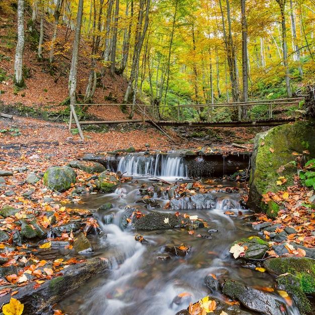 Bellissimo paesaggio autunnale con fiume nella foresta maestosa Foto Premium