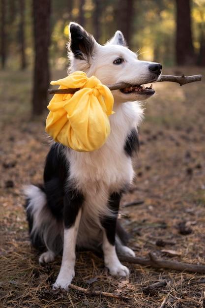 Bellissimo cane bianco e nero con il suo pranzo Foto Premium
