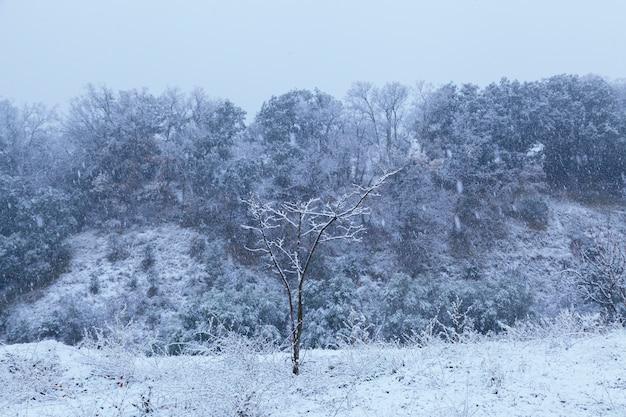 Splendido scenario blu di un parco coperto di neve Foto Premium