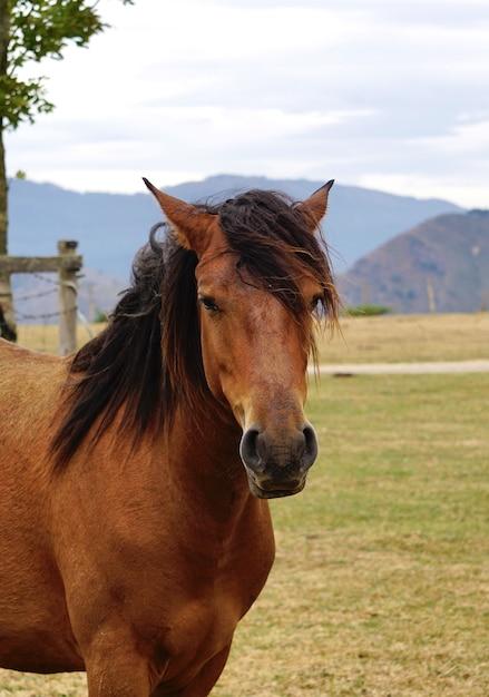 Bellissimo ritratto di cavallo selvaggio marrone, fauna animale Foto Premium
