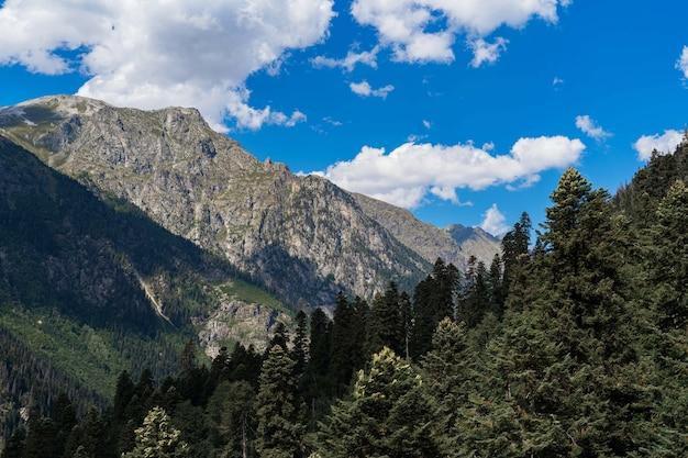 Belle montagne del caucaso, alti pini e cielo blu. Foto Premium