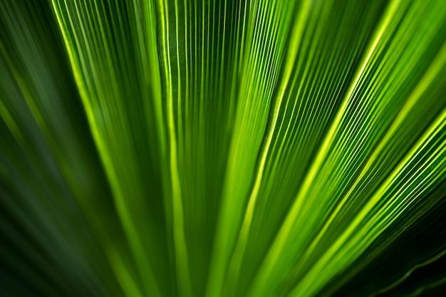 Bellissimo modello esotico di foglie di palma tropicale verde Foto Premium