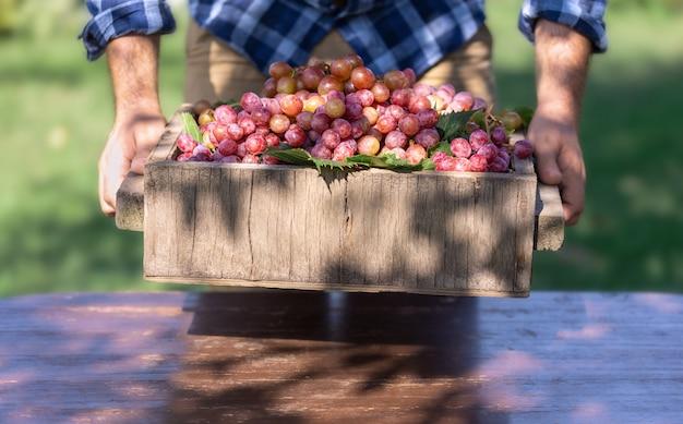 Bella uva fresca cruda, biologica Foto Premium