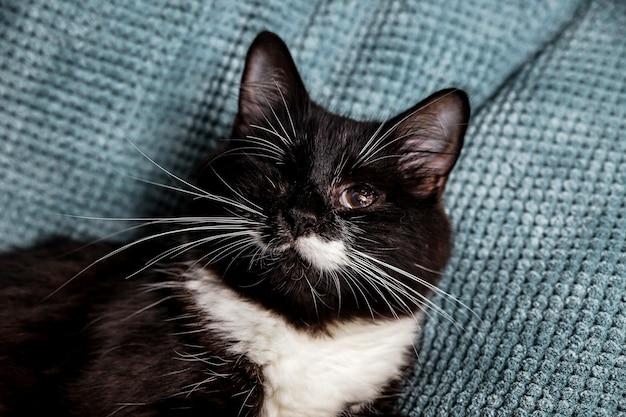 Un bellissimo gatto peloso bianco e nero con un occhio solo sul divano Foto Premium
