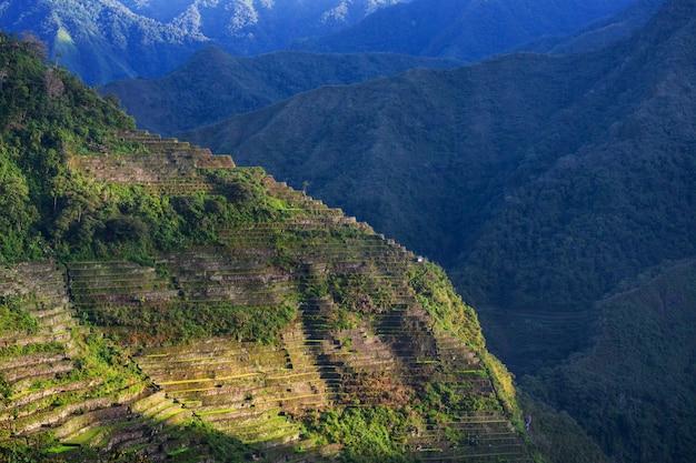 Belle terrazze di riso verde nelle filippine. coltivazione del riso nell'isola di luzon. Foto Premium